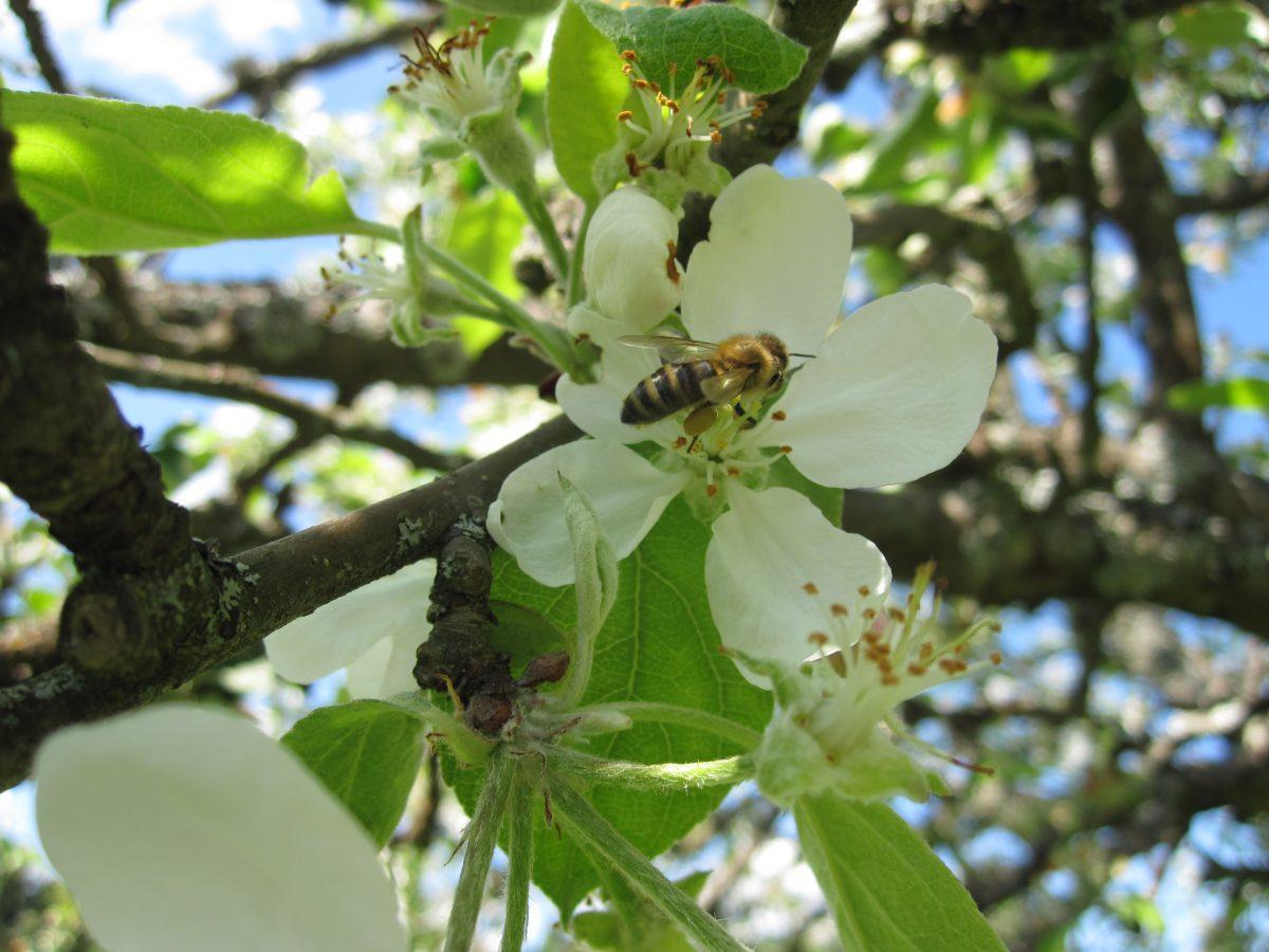 imkerei-bramreither-helfenberg-muehlviertel-bienen-honig-insektizide