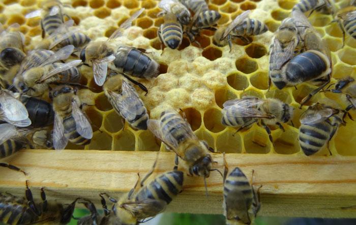imkerei-bramreither-helfenberg-muehlviertel-bienen-honig
