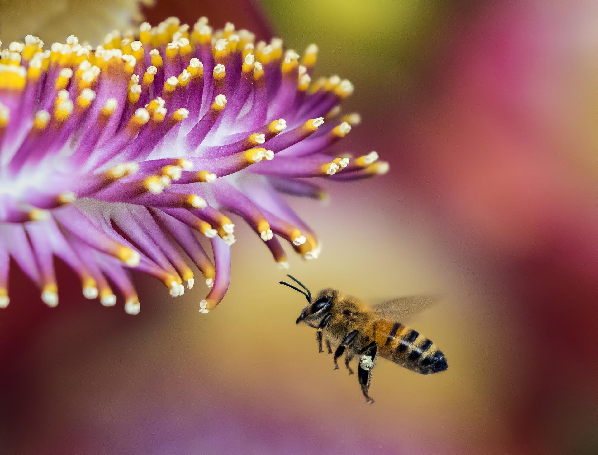 Imkerei Bramreither - Mühlviertel - Bienenprodukte