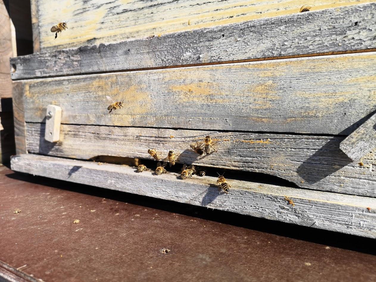 Bio Imkerei Bramreither - Bienenprodukte aus dem Mühlviertel - Pollen - Hektisches Treiben