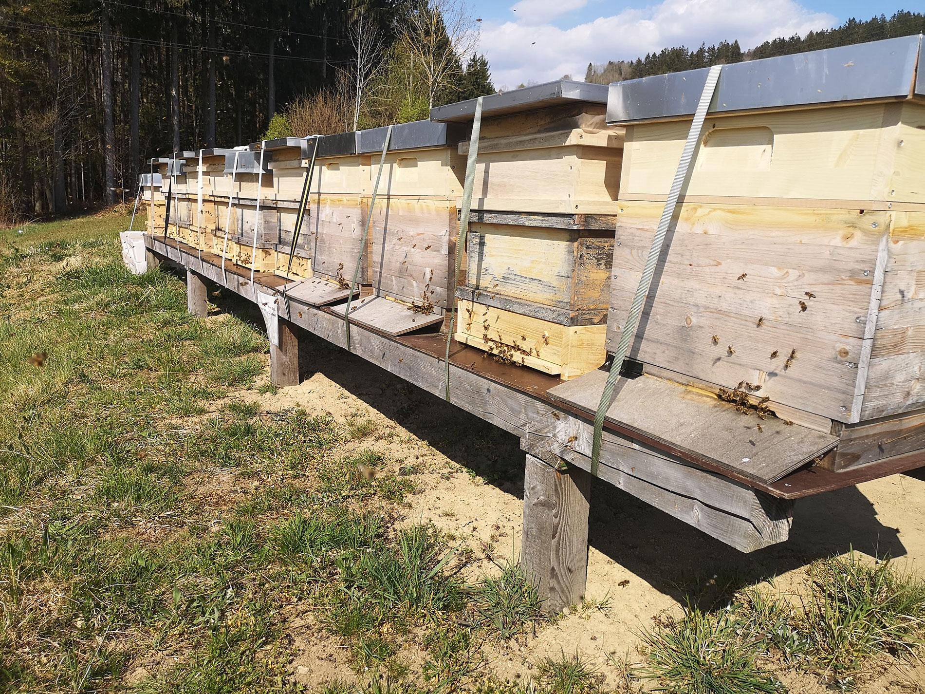 Bio Imkerei Bramreither - Mühlviertel - Honigräume aufsetzen - Nektar sammeln