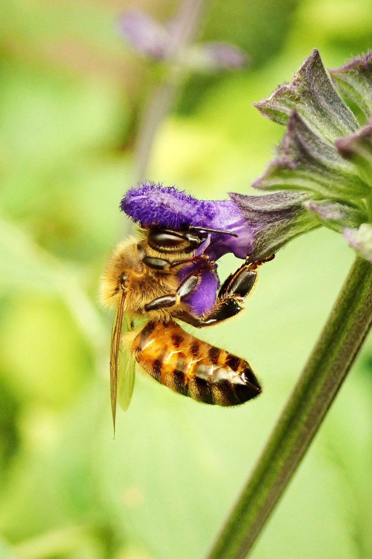 bioimkerei bramreither - Mühlviertel - Biene - Produkte - Kontakt