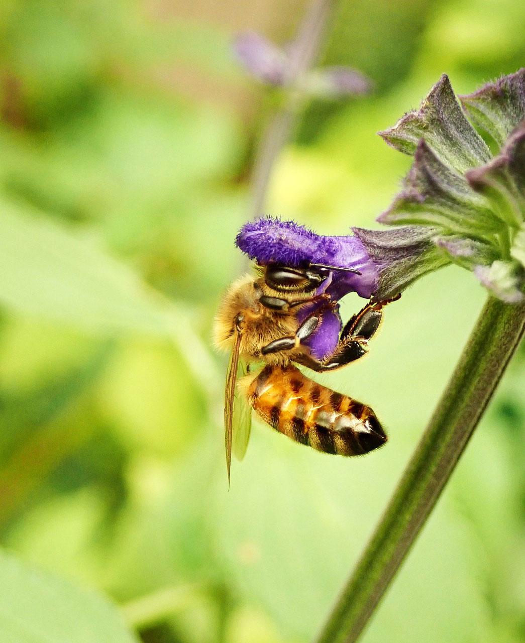 Bio Imkerei Bramreither - Bienenprodukte aus der Region Mühlviertel - Helfenberg - Penning