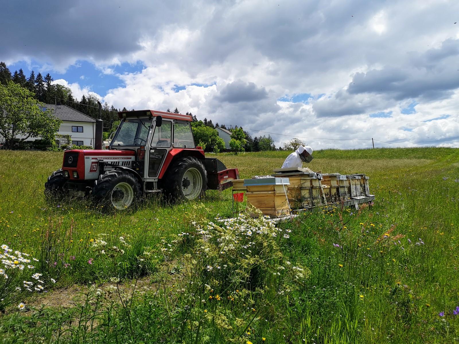 Imkerei Bramreither - Helfenberg - Penning - Mühlviertel - Honig Ernte - Blütenhonig