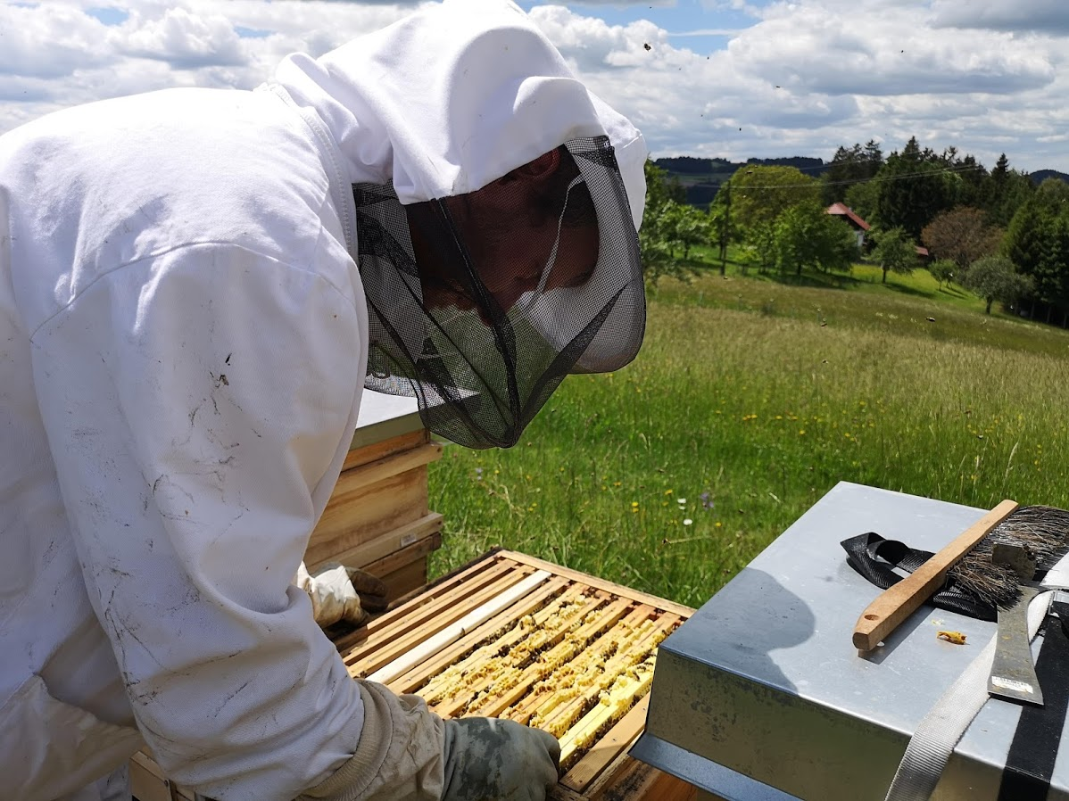 Bio Imkerei Bramreither in Penning (Helfenberg) ist nun bei Regionalfux gelistet - Mühlviertel - Honig