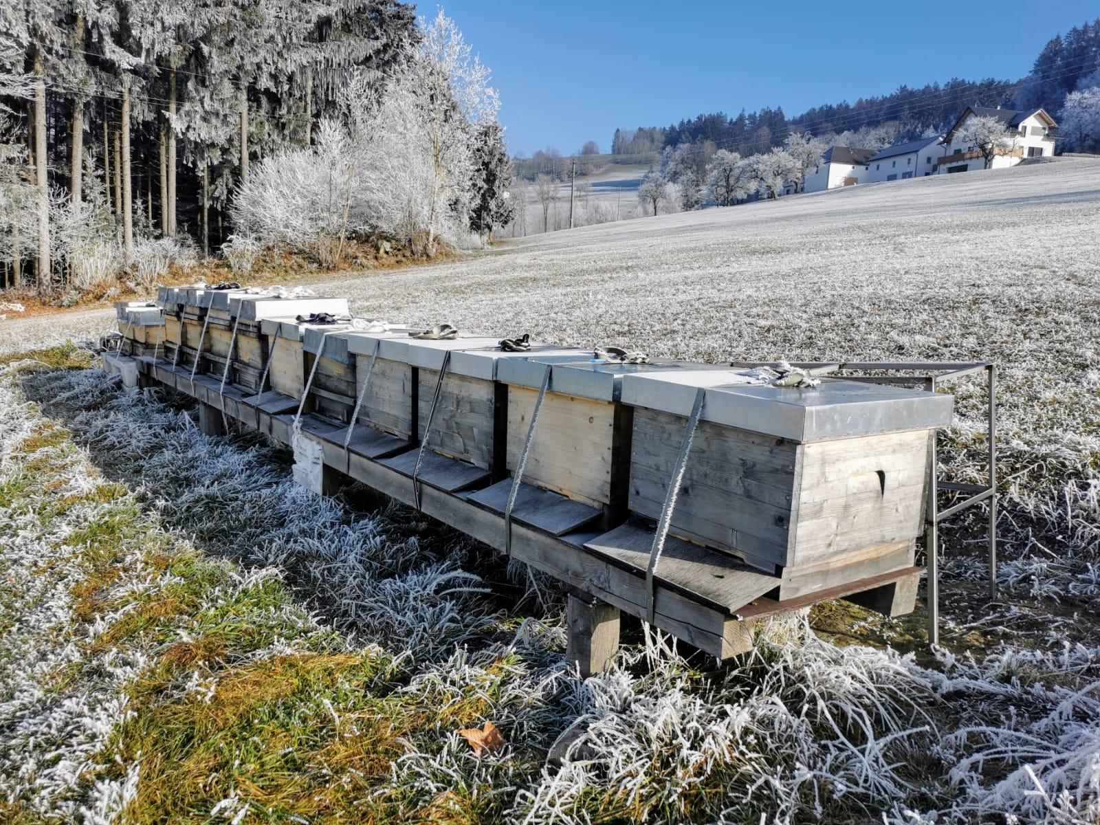 Bio Imkerei Bramreither - Frostiges Mühlviertel - Helfenberg - Penning - Bienen im Winter