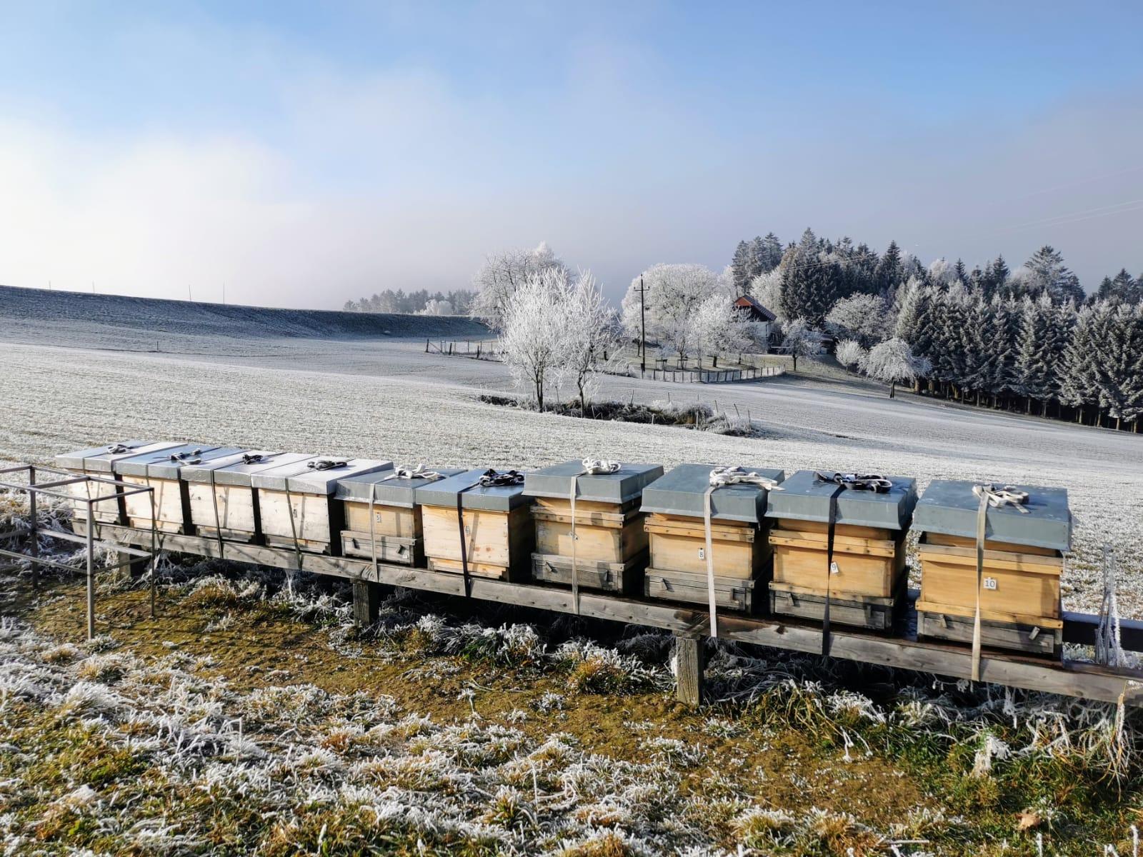 Bio Imkerei Bramreither - Frostiges Mühlviertel - Bienen im Winter - Penning - Helfenberg