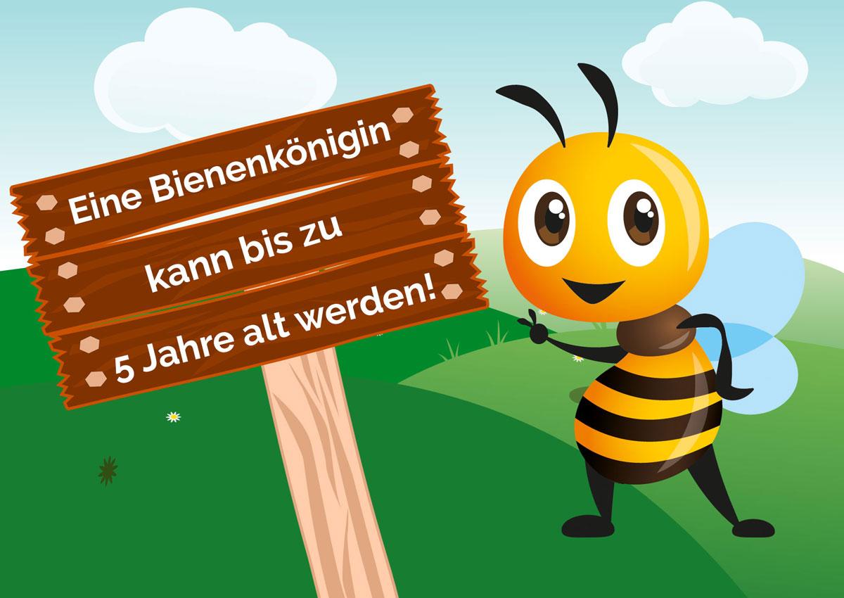 Eine Bienenkönigin kann bis zu 5 Jahre alt werden - Bio Imkerei Bramreither - Mühlviertel - Penning - Helfenberg - Biene Valentine