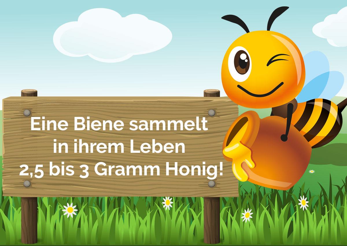 Eine Biene sammelt rund 3 Gramm Honig in ihrem Leben - Bio Imkerei Bramreither - Mühlviertel - Penning - Helfenberg