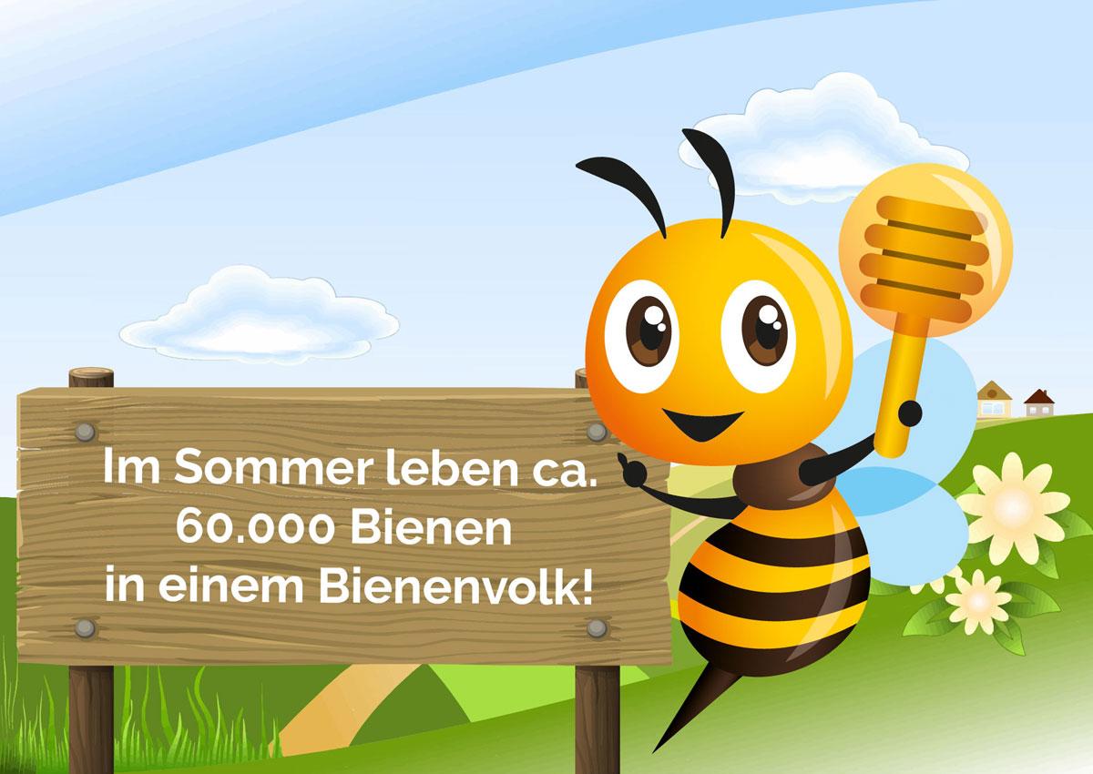 Bio Imkerei Bramreither- Mühlviertel - Biene Valentine - 60000 Bienen im Bienenvolk im Sommer - Penning - Helfenberg - Honig aus der Region