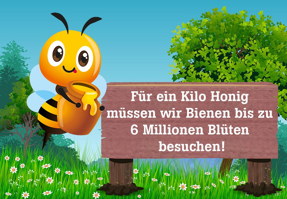 Bio Imkerei Bramreither - Biene Valentine - Für ein Kilo Honig müssen Bienen bis zu sechs Millionen Blüten besuchen - Mühlviertel - Penning - Helfenberg