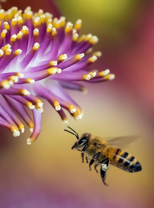 Bio Imkerei Bramreither - Bienenpatenschaft im Mühlviertel - Bienenpate in Österreich werden - Helfenberg - Penning