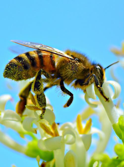 Bio Imkerei Bramreither - Bienenpatenschaft im Mühlviertel - Bienenpate werden - Helfenberg - Penning