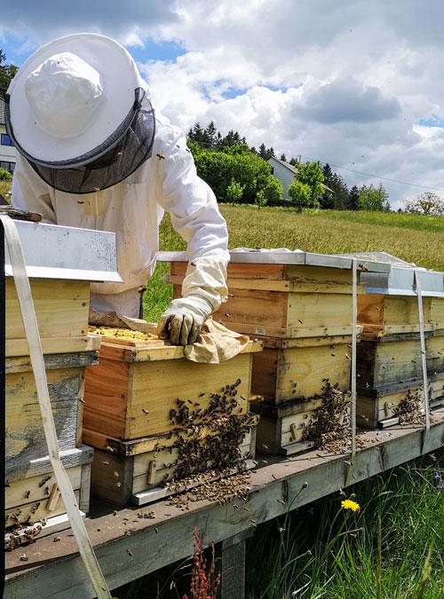 Bio Imkerei Bramreither in Penning (Helfenberg im Bezirk Rohrbach) - Mühlviertel - Honig - Biene