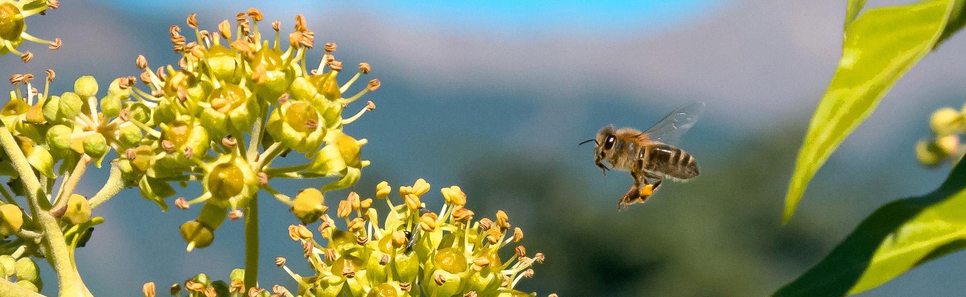Bio Imkerei Bramreither - Honig - Produkte - Mühlviertel - Rohrbach - Helfenberg - Penning - Biene - Shop - regional kaufen