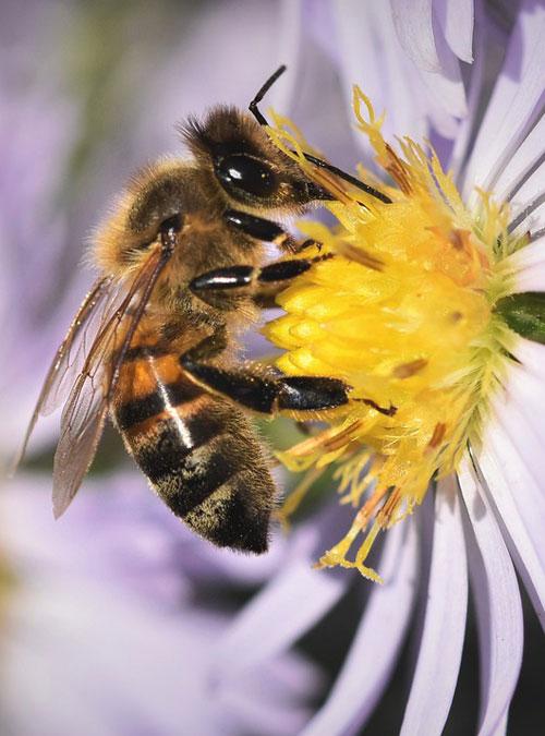 Bio Imkerei Bramreither - Bienenpatenschaft im Mühlviertel - werde Bienenpate