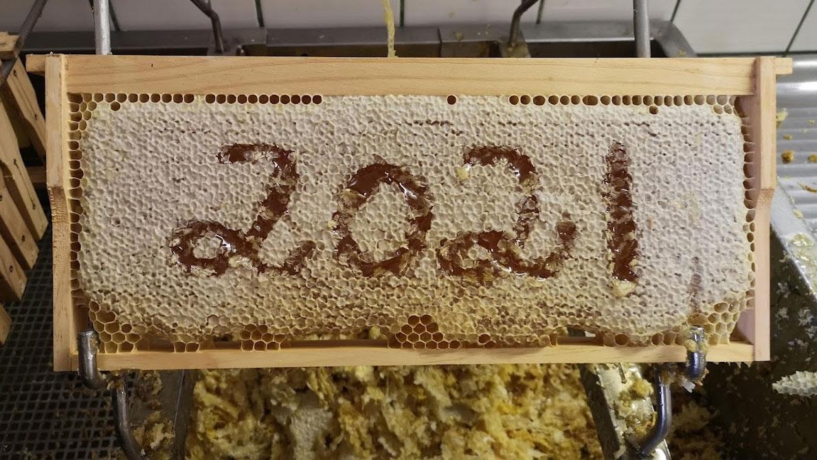 Bio Imkerei Bramreither - Honigernte 2021 - Honigwabe - Entdeckelungswachs - Bienen - Honig - Helfenberg - Rohrbach - Mühlviertel - Oberösterreich - Honigernte für 2021 erfolgreich abgeschlossen