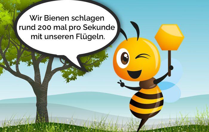 Bio Imkerei Bramreither - Mühlviertel - Rohrbach - Helfenberg - Biene Valentine - Bienen schlagen rund 200 mal pro Sekunde mit den Flügeln