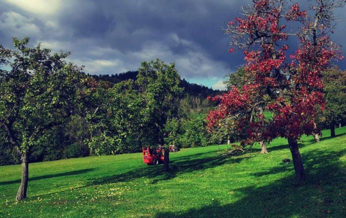 Bio Imkerei Bramreither - Mühlviertel - Rohrbach - Helfenberg - Penning - Herbstzeit ist am Bauernhof - Obstbaum